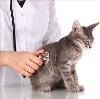 Ветеринарные клиники в Домбаровском